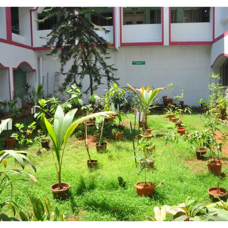 Botanical garden 1
